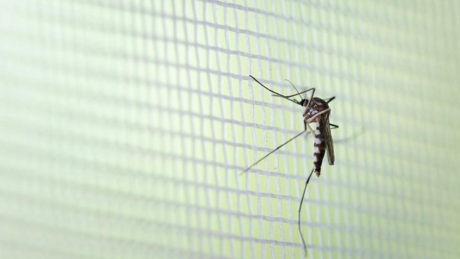 Três municípios do litoral contam com infestação do Aedes aegypti