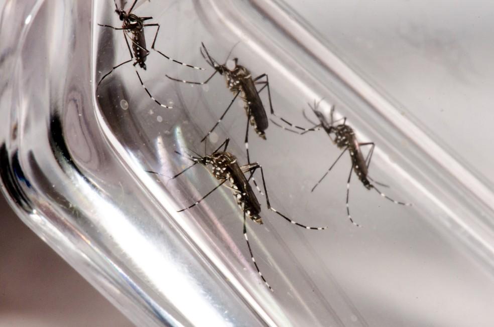 Litoral do Paraná registra 293 casos de dengue em investigação