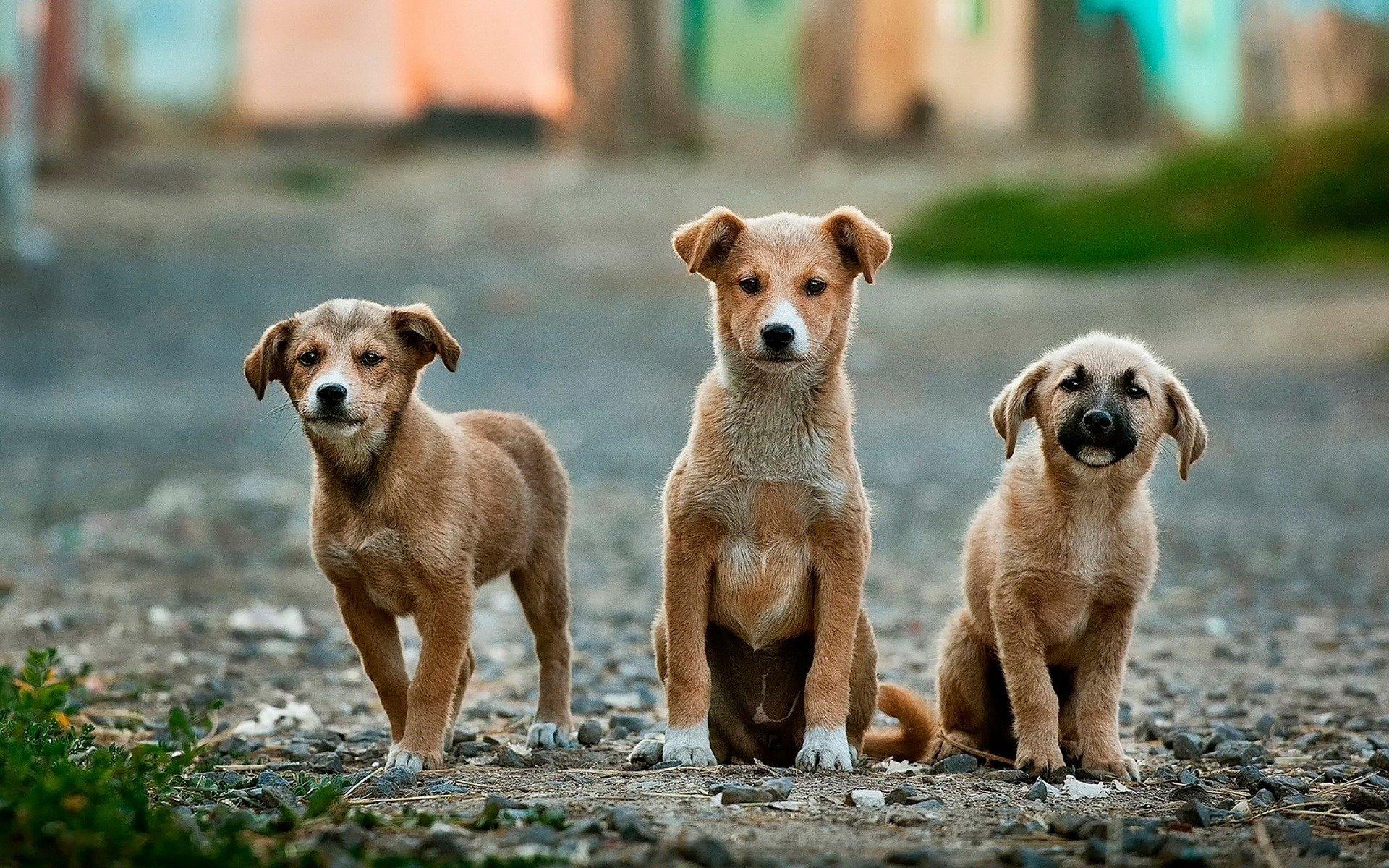 Pesquisa da UFPR descarta transmissão de Coronavírus de cães para humanos