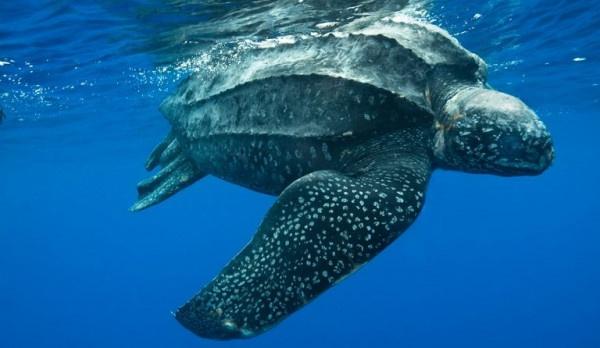 Área de praia em Pontal do Paraná é isolada para preservar ovos de tartaruga em extinção